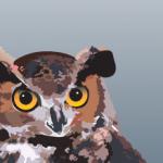 Dec 1:  SCWIST Meet-up at the Owl Show